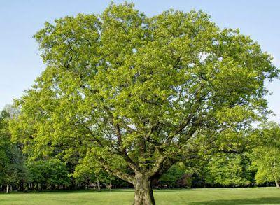 Essay-writing: SAVE TREE SAVE LIFE