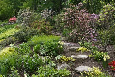 Woodland landscaping ideas putnam garden tour on for Woodland garden designs