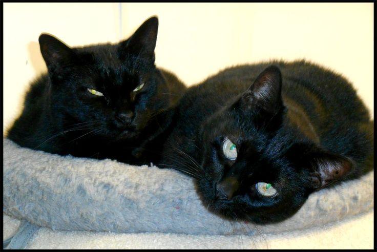 Whisker & Blackie