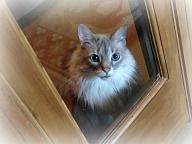 Sascha (Dr. Robson's cat) boarding with us in the luxury suites!