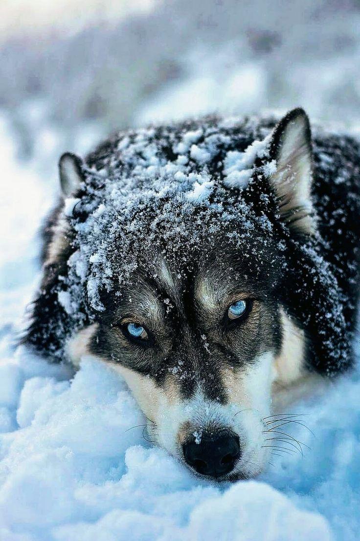 January.. .Wolf Moon