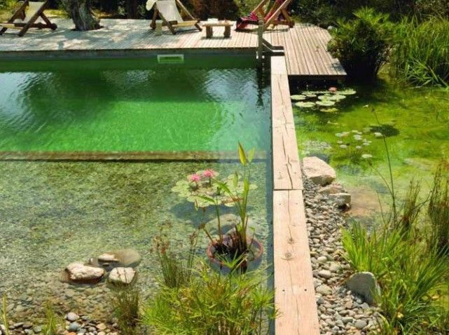 Natural pool: No chemical needed to disinfect water: it's pure organic, where only plants work. PISCINE NATURELLE