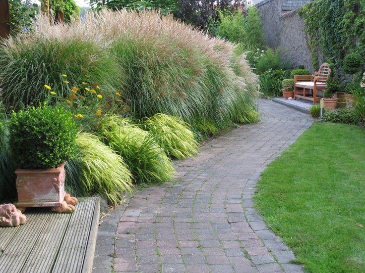 Die besten 25 schachtelhalm ideen auf pinterest schachtelhalm schilf mexikanische terrasse - Gartengestaltung graser ...