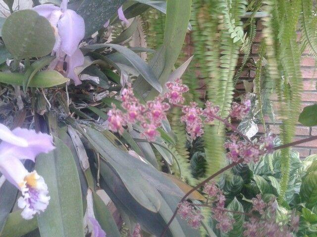 Orquídeas en su esplendor