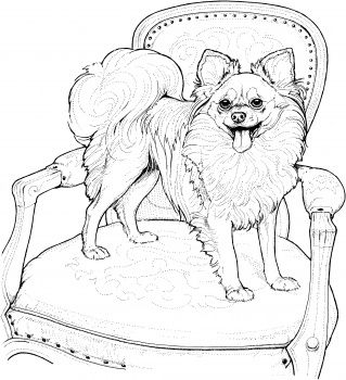 find this pin and more on favorite dog colouring pages papillon