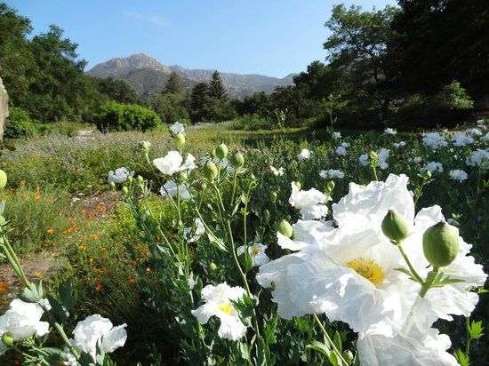 16 Best Santa Barbara Trip Images On Pinterest United States Santa Barbara Ca And Santa Barbara