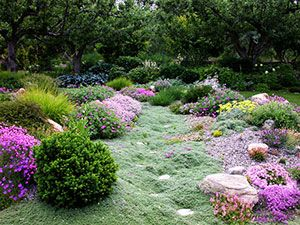 Perennials in xeriscaping