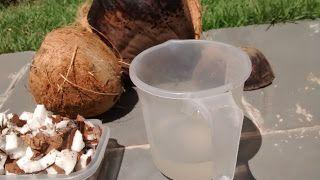 COCO VERDE, COCO MADURO. mg-perez.blogspot.com.br Casa na praia tem coqueiro. Se tem coqueiro, tem coco e água de coco. Caipira de São Paulo, perguntei outro dia de... Casa na praia tem coqueiro. Se tem coqueiro, tem ...