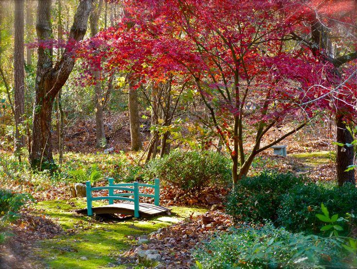 Blue bridge in a woodland garden: Outdoor, Woodland Garden