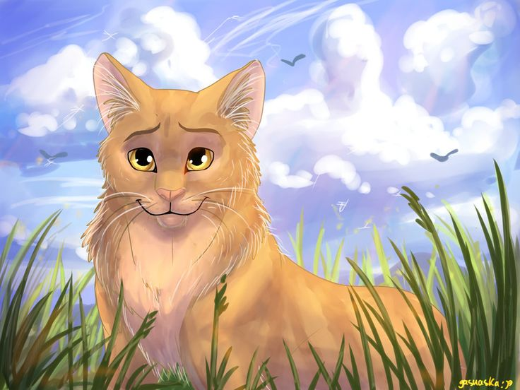 When People Say Warrior Cats Are Girly