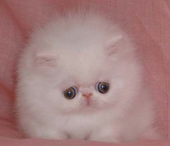 Pictures of cats with down syndrome pictures 3