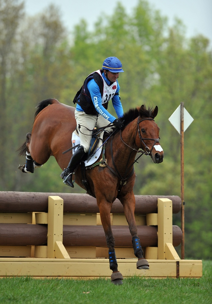 1000 Images About Cross Country On Pinterest Horses