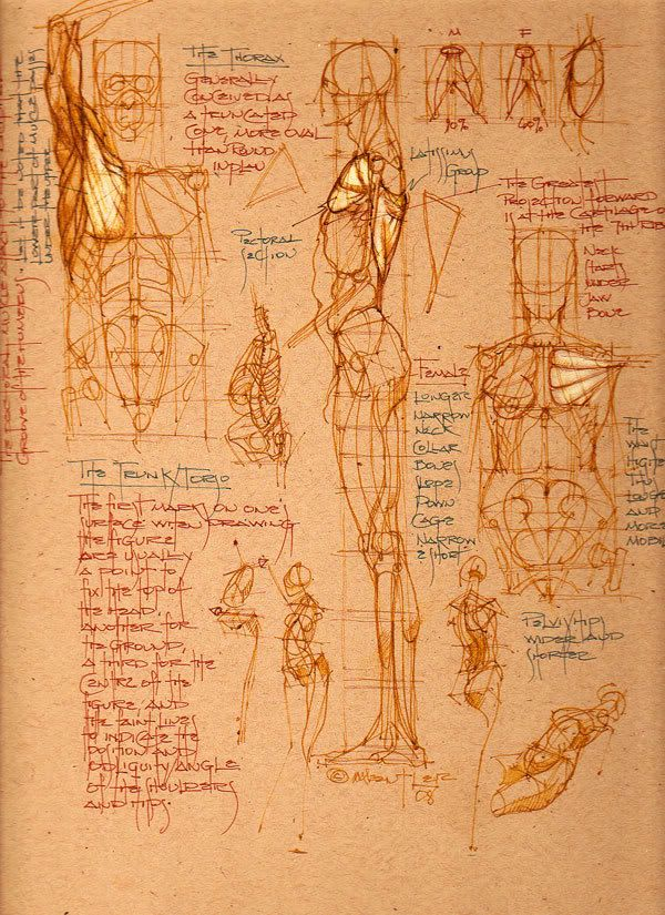 Drawing Anatomy for Artists: Ultimate, Free Guide ...