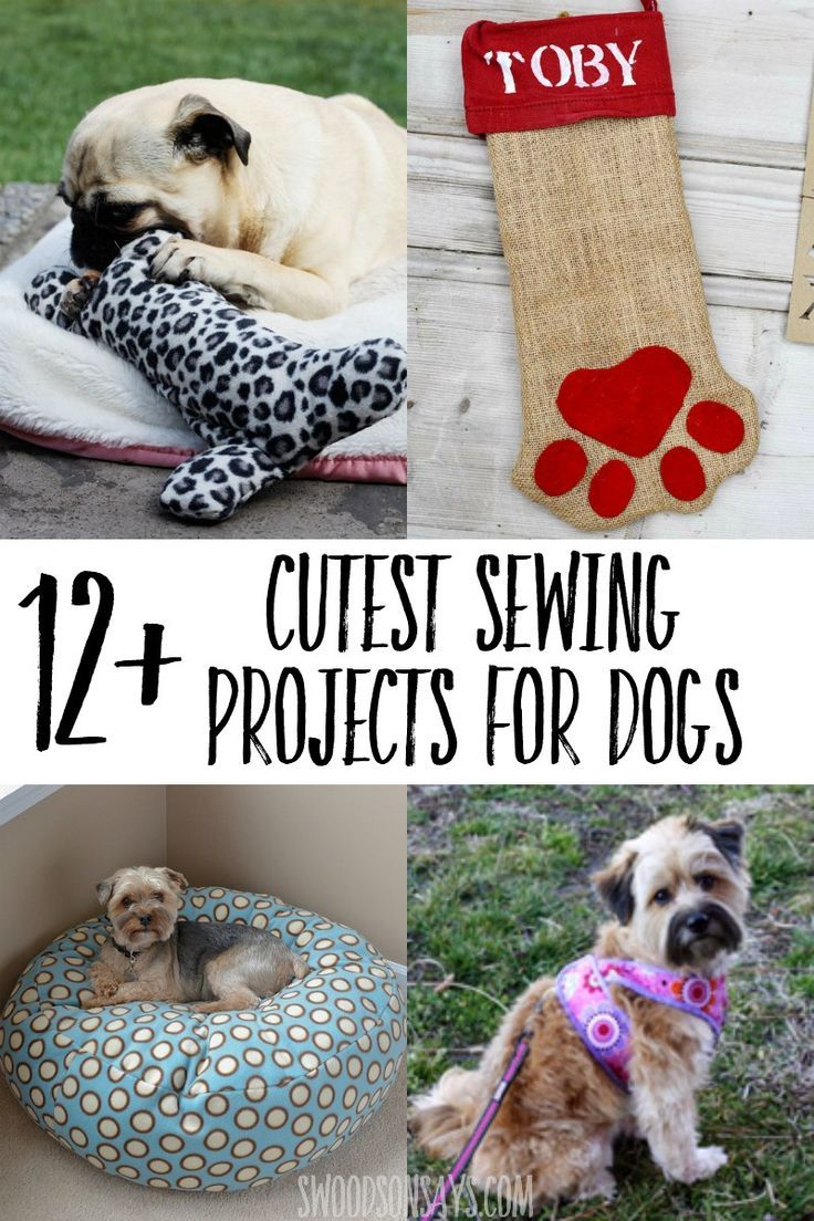 12 Cutest Sewing Ideas For Dogs Sewing Projects For Beginners