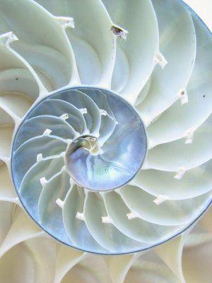 Nature | Animals Under the Sea | Rosamaria G Frangini || AllThingsWHITE | White Nautilus Shell                                                                                                                                                     More
