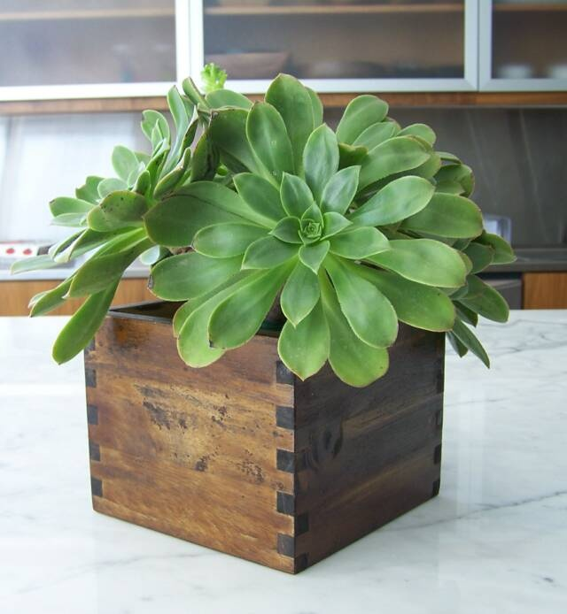 e1d4eadfed50e25de511065e6c5c4b1f--wooden-planters-planter-bo Homemade Plant Stands And Holders on glass plant holders, metal plant holders, outside plant holders, plant sign holders, flower pots and holders, tools and holders, outdoor plant holders,