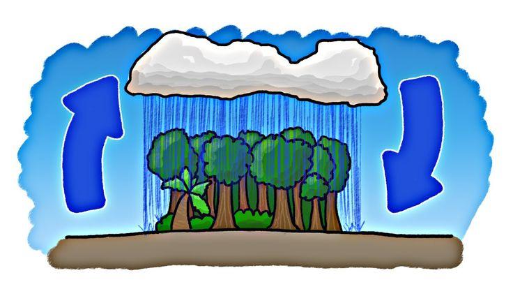 Wat kwam er eerst? Het regenwoud of de regen?
