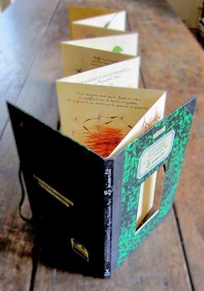 Thierry Dedieu fait des histoires: les petits carnets de curiosités de Magnus Philodolphe Pépin