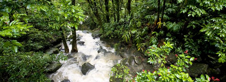 Puerto Rico El Yunque National Forest -  Hike through America's only tropical rain forest