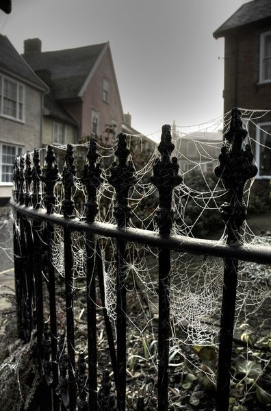"""Twitter      """"frosted cobwebs on iron railings in Eye Suffolk England""""  by Trigger Image"""