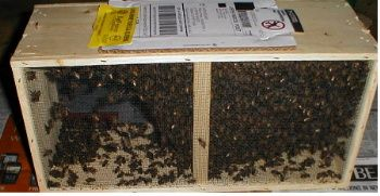 How to Buy Bees and Install Them in Your New Hive