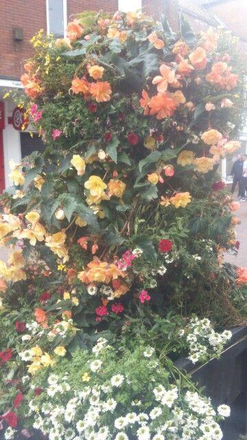 English flowers, Bridgwater town centre