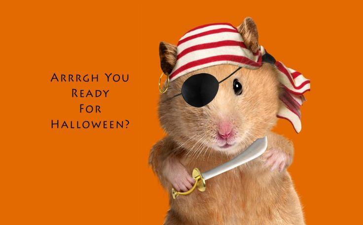 Pirate Hamster HD Wallpaper