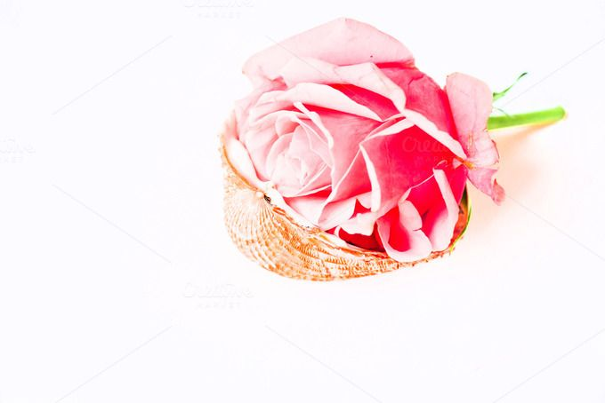 Seashell with rose I Styled Stock - Business