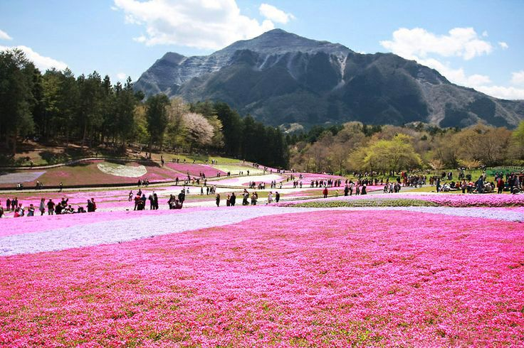 6 amazing places to travel & see pink! via The Love Assembly | Takinoue Town, #Japan