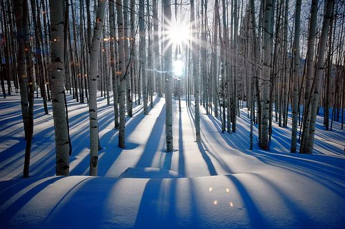 "Peter Lik's ""Sunlit Birches"""