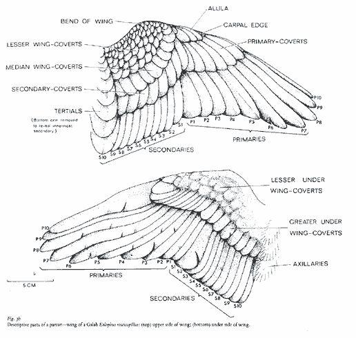 8 best bird felting reference images on pinterest