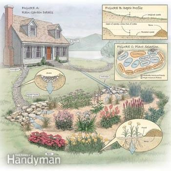 How to Build a Rain Garden in Your Yard - Nurture the land in your yard and protect the environment by channeling rain water and runoff from gutters into a rain garden planted with deep-rooted, colorful native plants.