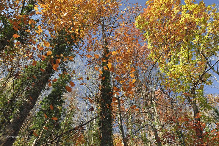 colors autumn - colors autumn