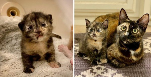 Street Cat Finds Family To Help Raise Her Kittens Her Tiny Lookalike Is Determined To Stand Out Kittens Tortie Kitten Foster Kittens