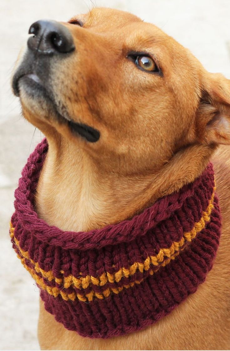 Dog Cowl Pattern {Gryffindor House Colours}   Dog sweater ...