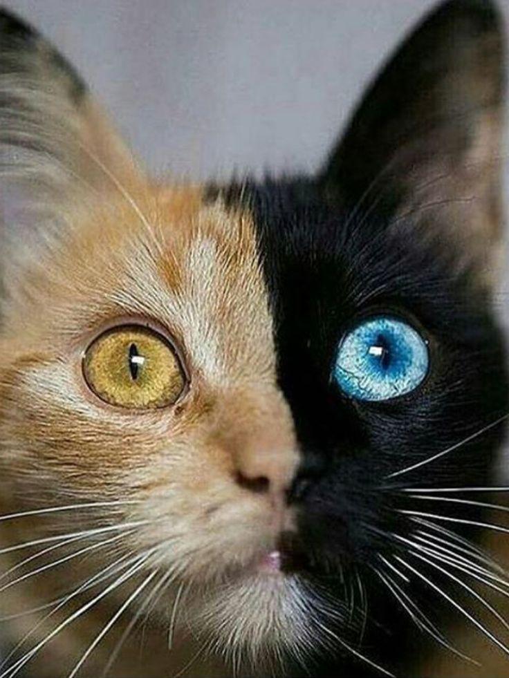 https://catlover365.myshopify.com