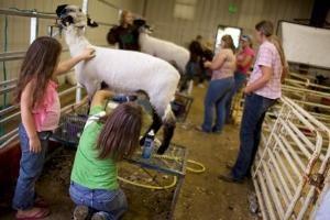 Utah County Fair - Aug. 15-17, 2012