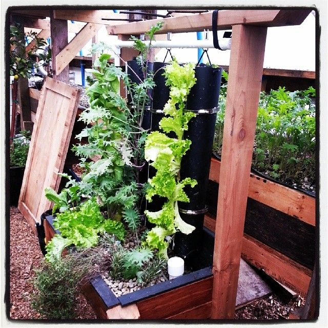 1000 ideas about vertical vegetable gardens on pinterest for Vertical vegetable garden