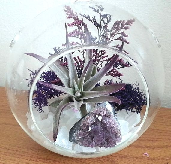** LARGE 6 HANGING / STANDING GLOBE - Dont mistake this for a small 4 or 5 Terrarium globe. See 4th photo for difference. Beautiful purple and lilac dried floral sets the backdrop for this gorgeous crystal terrarium. The base consists of tumbled clear quartz stones. On top is a beautiful large 4 - 5 purple Harrissi air plant with a genuine deep purple Amethyst Crystal cluster. The photo just cannot do this terrarium any justice at all. The terrarium shimmers and shines as the light refle...