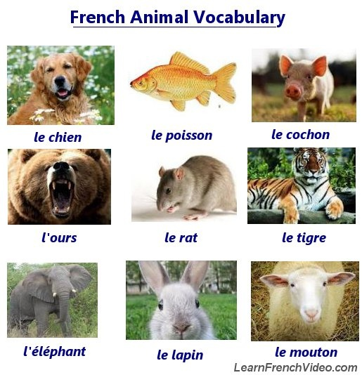 learn how to say 40 kinds of animals in french includes. Black Bedroom Furniture Sets. Home Design Ideas