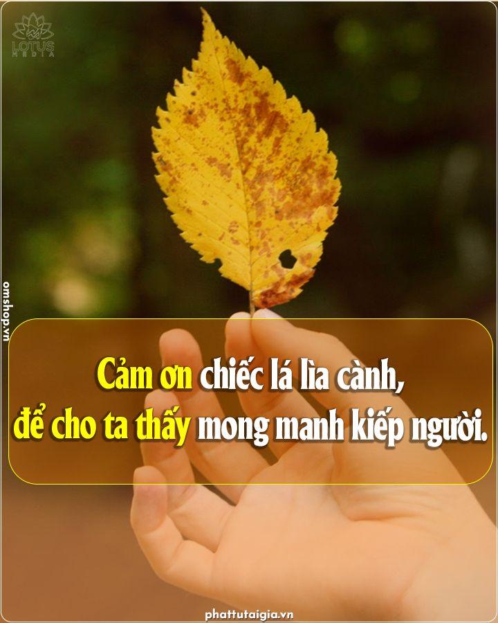 Cảm ơn Chiếc La Lia Canh Trong 2021 Lời Phật Dạy Cam ơn Cam