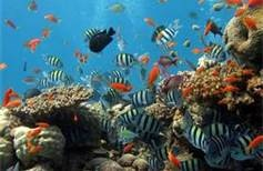 Fish In The Coral Reef - Bing Images