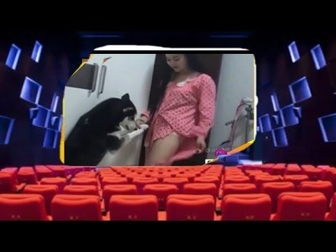 Funny Dog   ❣ Best Funny Videos Dogs Vines 2017 -  Try Not To Laugh Challenge -  #dog #funnydogs #puppy #doglover #animals #pet #cute #pets #animales #tagsforlikes Stop Your Dog's Behavior Problems! Click HERE to learn how! Funny Dog -Best Funny Videos Dogs Vines 2017 –  Try Not To Laugh Challenge  Compilation of unique funny videos about comedy genre. Hit the... - #Dogs