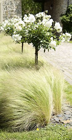 1000 images about plant schemes on pinterest for Grasses planting scheme