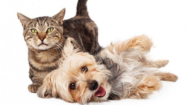Easy DIY Pet Treats and Fur Removal