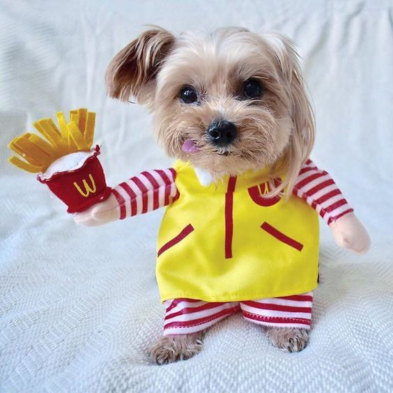 Can Dogs Eat French Fries? Are French