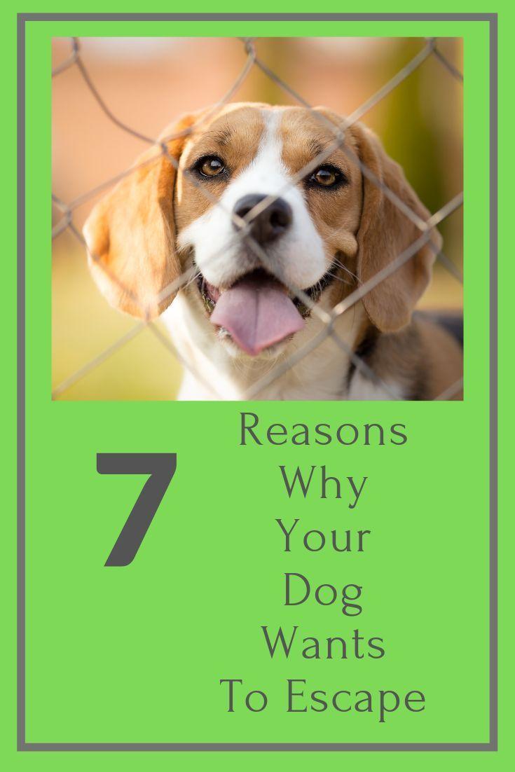 Escape Behaviour In Dogs Dogs Dog Behavior Dog Books