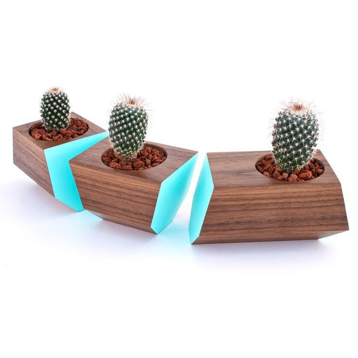 cool cactus container idea