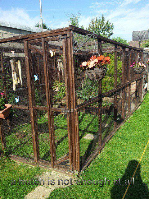 25 best ideas about rabbit enclosure on pinterest bunny for Outdoor rabbit enclosure ideas
