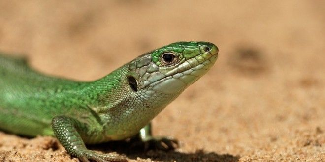 Lizard Squad Member Arrested • Load the Game